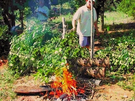 Domowe przygotowanie yerba mate 2