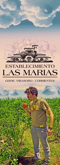 LAS MARIAS logo plantacja yerba mate 2