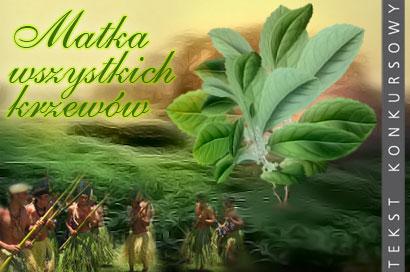 Yerba mate - matka wszystkich krzewów
